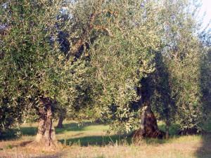 BETRIEB_Landwirtschaft