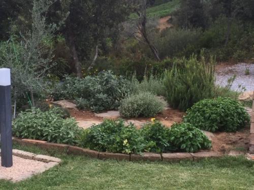 Der kleine Kräutergarten