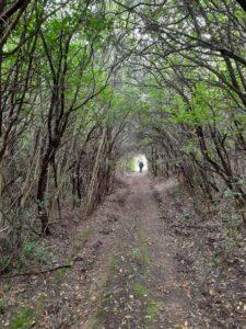 Wanderwege um Poggio Banzi
