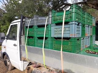 Transport der Oliven zur Presse